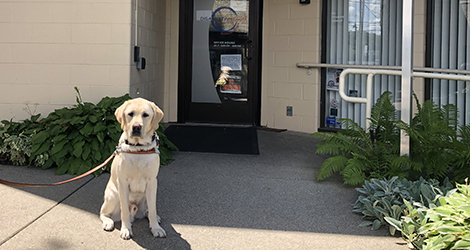 dog sitting in front of building